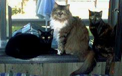 Biscuit,                   Tiger, and Muffin
